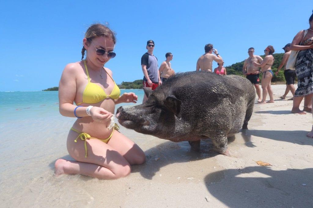 Pig island story 1 1