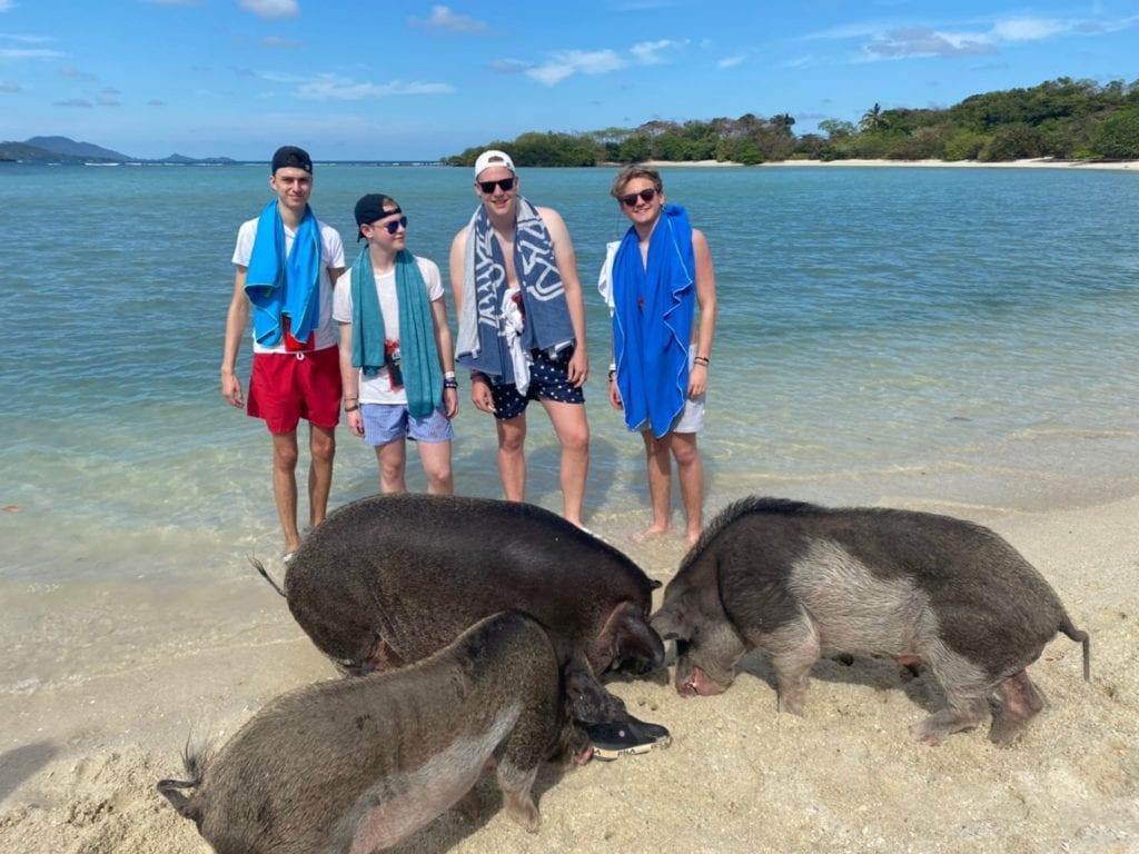 Pig island story4